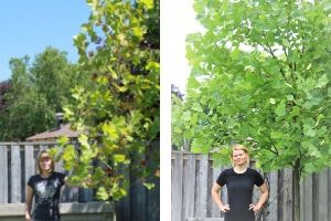 Collage of woman standing by the same sycamore tree. Before: smaller tree, After: the tree grew in height and density