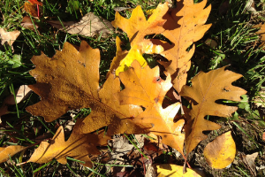 Leaves on the ground in the fall.