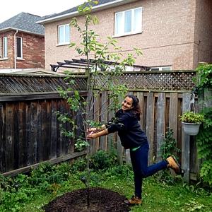 LEAF staff planting a tree in a backyard
