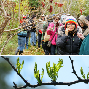 © 2018 Kanchan Maharaj & David Slaughter / LEAF: participants tasting sumac fruit and leafing branch in the spring