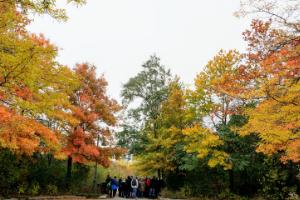 © 2018 Kanchan Maharaj / LEAF: Fall foliage at Colonel Samuel Smith Park