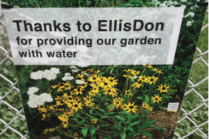 "© 2018 Natalie Secen: sign reads ""Thanks to EllisDon for providing our garden with water"""