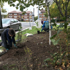 © 2018 Natalie Secen: volunteers planting in a garden by a road
