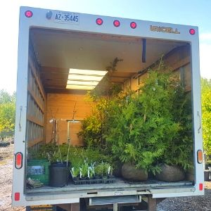 Cube truck full with trees, shrubs and perennials for planting and delivery by LEAF