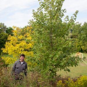 Ben standing by a Freeman maple