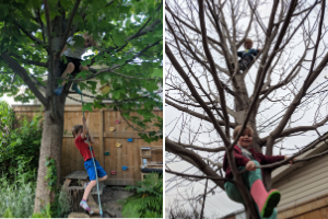 Children playing and climbing a tulip tree