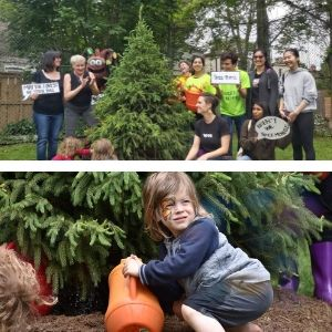 Picture collage of people posing by a newly planted white spruce and of a child watering it