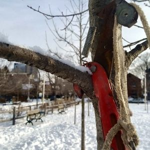 Pruner on a tree branch about to make a cut