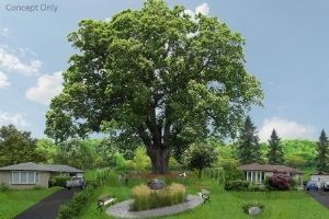 Red oak tree in the middle of parkette