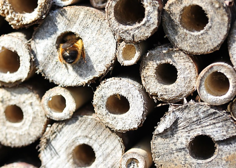 bee in a bee hotel