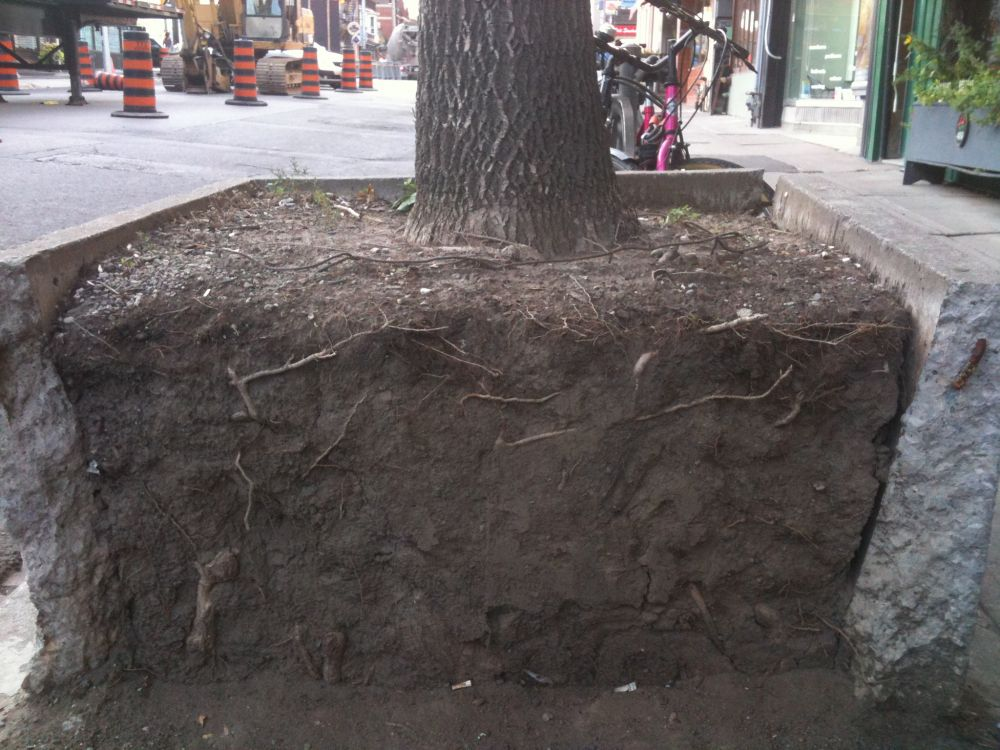 Healthy roots mean healthy trees leaf local for Where do we find soil