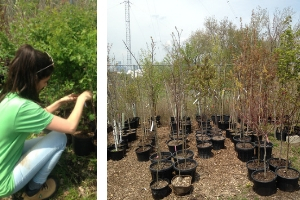 LEAF staff labeling shrubs, trees ready for delivery and planting
