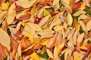 Dried leaves covering the ground