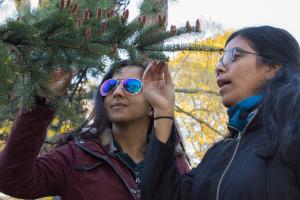 © 2017 Lillian Natalizio Two women inspect a spruce tree