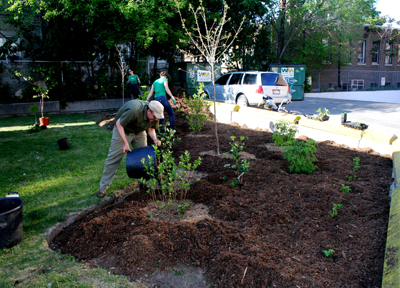 Planting at Bathurst Station