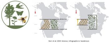 Native Bees have not adapted quickly enough to changing climates