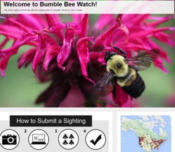 join the Great Canadian Bumble Bee Watch