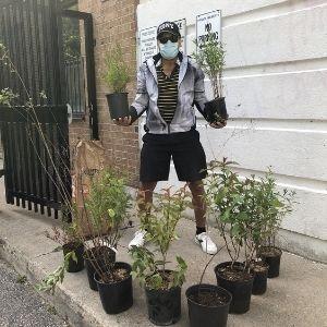 Man holding two shrubs