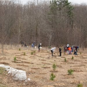 The naturalized area in Meander Park after the planting event