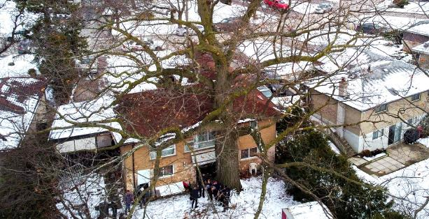 Red oak tree next to a house, covered in snow