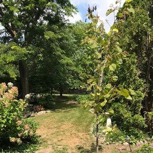 Naturalized backyard