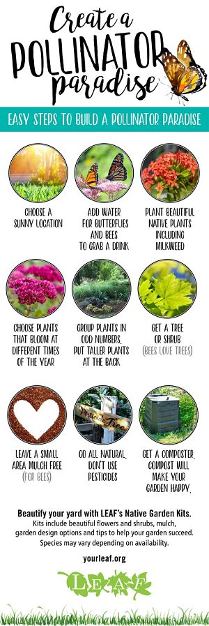 Infographic showing how to create a pollinator paradise
