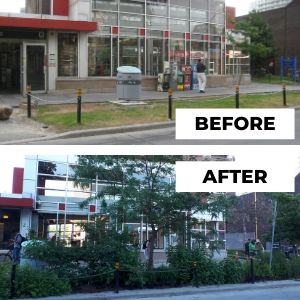 Before and after photo of Spadina garden