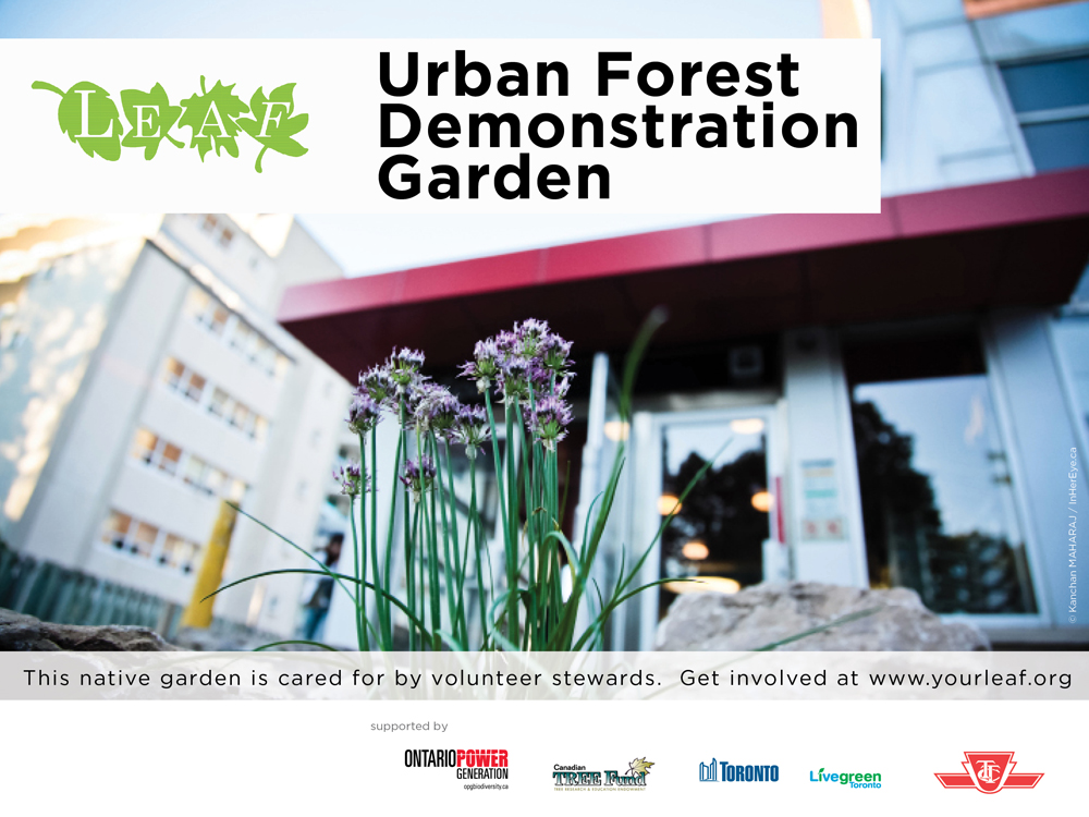 Urban forest demonstration garden
