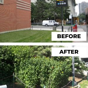Before and after photo of St Clair garden
