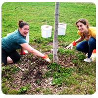 Stewardship in the urban forest