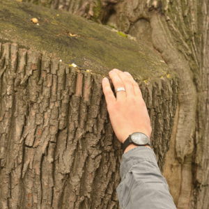 © 2017 David Slaughter Instructor's hand points to damage on a tree