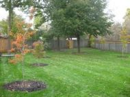 Native trees planted in a Toronto yard