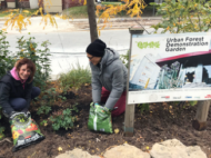 © 2018 Natalie Secen: volunteers adding compost to the garden