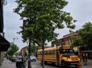 Street tree of Toronto