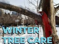 """Winter Tree Care"" written over a pruner slicing through a snowy branch"