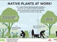 """LEAF's """"Native Plants at Work!"""" sign"""