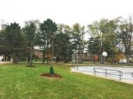 Two of the trees planted by LEAF and cared for by Annisha