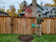 A person watering a pin cherry tree in a backyard