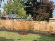 A backyard with a recently planted tree