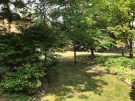Backyard shaded by many trees