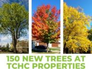 "Collage of American elm, sugar maple and honey locust. Reads: ""150 new trees at TCHC properties"""