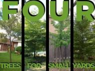 Four Trees for Small Yards