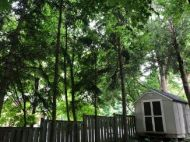 Tall, lush, green trees making a backyard look like a forest