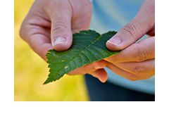 Close up of hands holding a leaf