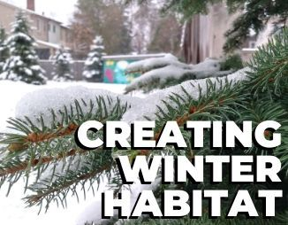 """White spruce in the snow, reads """"Creating Winter Habitat"""""""