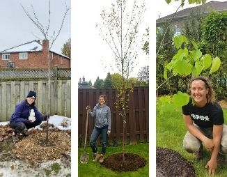 Three photos, each with a young woman next to a recently planted tree