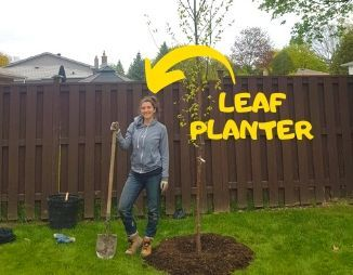 Adriana Rezai-Stevens, LEAF Planting and Stewardship Coordinator, next to a paper birch