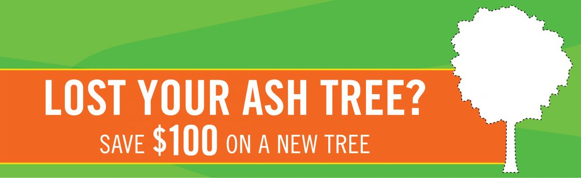 Lost Your Ash Tree? Save $100 on a new tree
