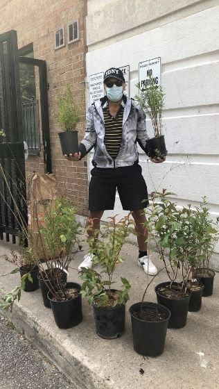 Man standing with shrubs in pots