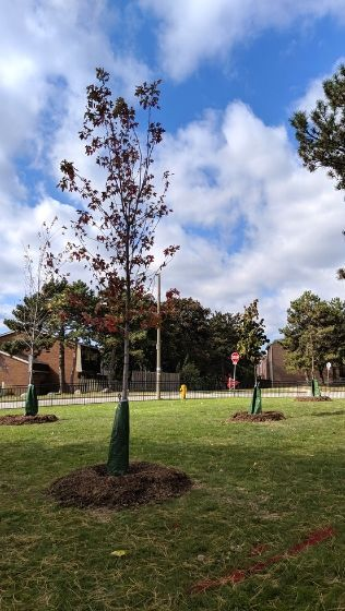 Trees planted on Toronto Community Housing Corporation properties